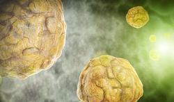 Waarom verspreiden virussen zich razendsnel?