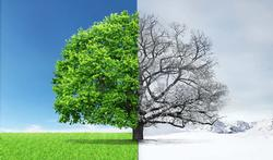 123-boom-zomer-winter-sterfte-02-18.jpg