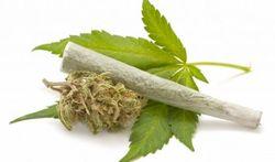 Mogelijk verband tussen cannabis en allergie