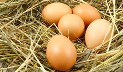 Een positieve kijk op het ei