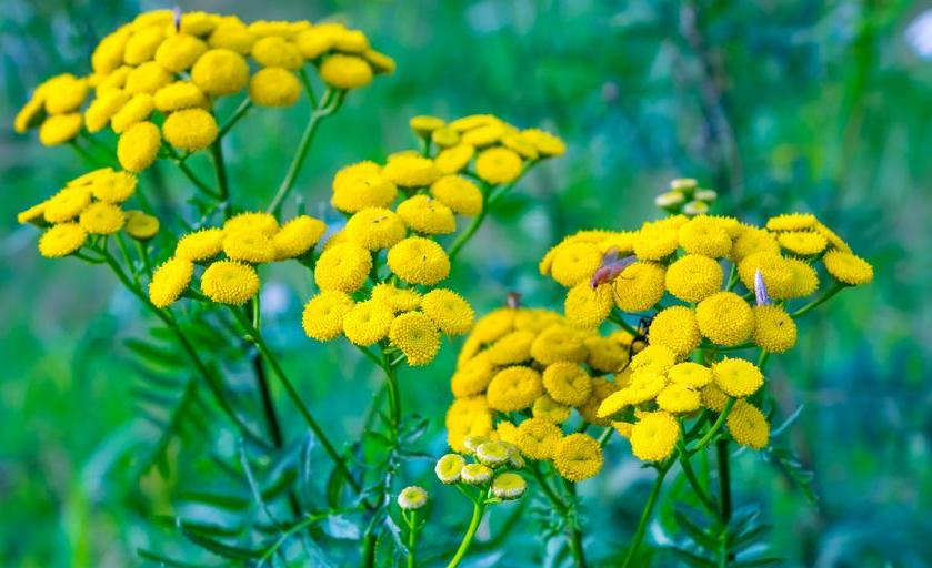 123-gele-bloemen-08-17.jpg