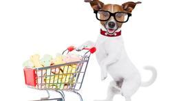Mag uw huisdier mee op restaurant of naar de winkel?