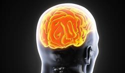 Tweetaligheid, een groot pluspunt voor de hersenen