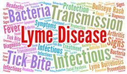 Ouderen gevoeliger voor lymeziekte