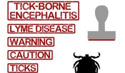 Teken-encefalitisvirus in Nederland aangetroffen