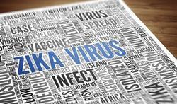 Zikavirus: waarom is het gevaarlijk als u zwanger bent of wilt worden?