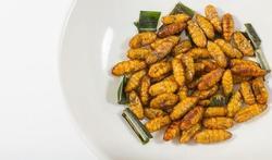 Waarop letten bij het eten van insecten?