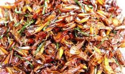Welke insecten zijn eetbaar?