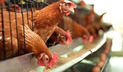 De meest gestelde vragen over vogelgriep