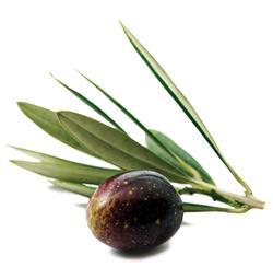 Olive-DET-adv.jpg