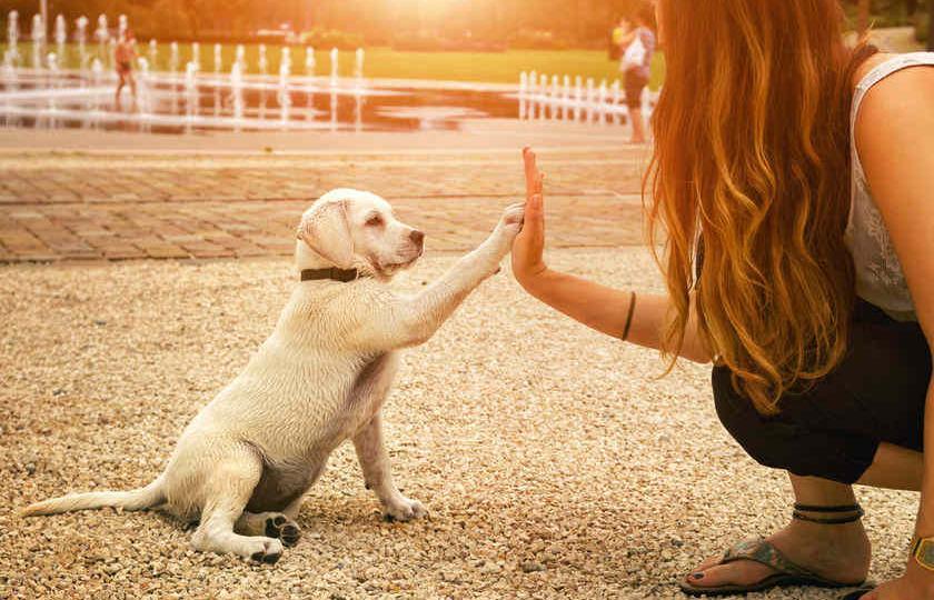 f-123-HD-gedag-puppy-12-17.jpg