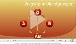 Video: Wegwijs in bloedgroepen