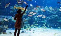 L'aquarium, un anti-stress rapide et efficace