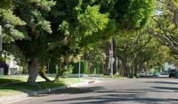 Une rue bordée d'arbres, c'est excellent pour la santé !
