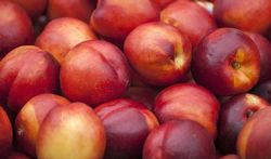 123-fruit-nectarines-170_07.jpg