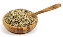 Les graines de chanvre pour faire baisser le cholestérol