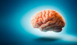 123-hers-hersenen-10-18.jpg