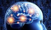 Vidéo - Le fonctionnement du système nerveux