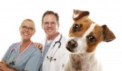 Cancer de la prostate : le flair exceptionnel du chien