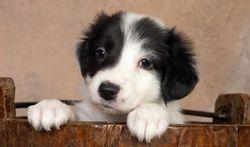 Un chien à la maison : une protection pour votre cœur