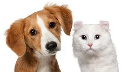Chien et chat : le citron contre les puces