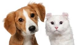 Cannabis : attention danger pour les chiens et les chats