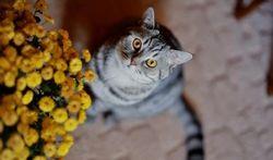 Un chat à la maison : comment protéger vos plantes d'intérieur
