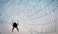 Piqûre d'araignée : les remèdes naturels