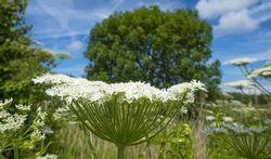 Vidéo - Comment les plantes fabriquent-elles de l'oxygène ?