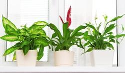 Les astuces naturelles pour nettoyer ses plantes d'intérieur