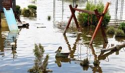 Pouvez-vous consommer les légumes d'un jardin inondé ?