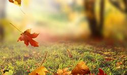 Comment ramasser efficacement les feuilles mortes ?