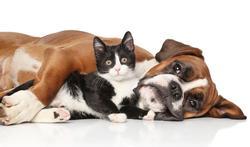 Un chien ou un chat pour protéger votre cœur