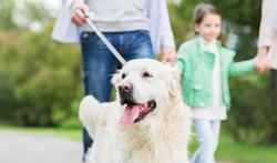 Promenade : quels sont vos liens avec votre chien ?