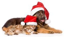 Chien et chat : les dangers des fêtes de fin d'année