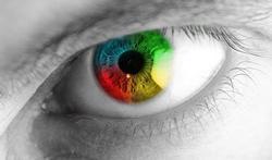 Vidéo - L'oeil et la vision