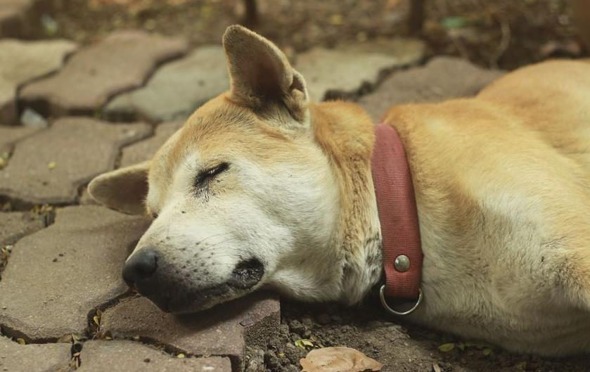 123-HD-dood-hond-04-17.jpg