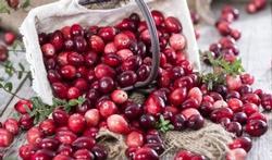 Cranberrysupplement voorkomt blaasontstekingen bij kwetsbare ouderen