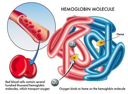 123-afb-hb-porfyrie-hemoglob-bloed-xtr-08.jpg
