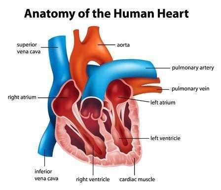 123-anatom-hart-06-16.jpg