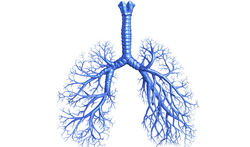 Cara-test: heb je last van je ademhaling?