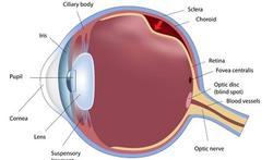 Netvliesloslating (ablatio retinae)