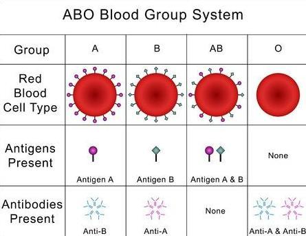 o positief bloed