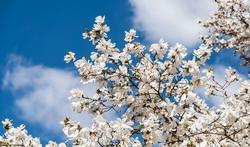 Minder allergie bij lentekinderen