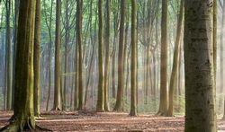 Bomen redden levens
