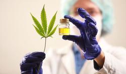 Cannabisolie nu vrij verkrijgbaar in apotheken