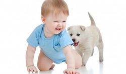 Huisdieren beschermen kinderen tegen infecties en tegen astma