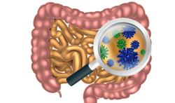 Probiotica dragen bij aan een gezonde darmflora