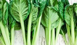123-groent-tatsoi-10-15.jpg