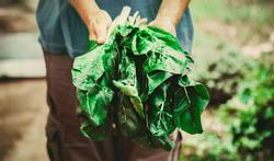 Test je kennis over biologische voeding